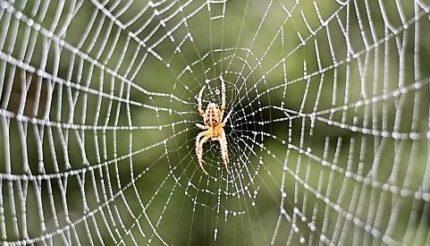 Do you work in a spider organisation?